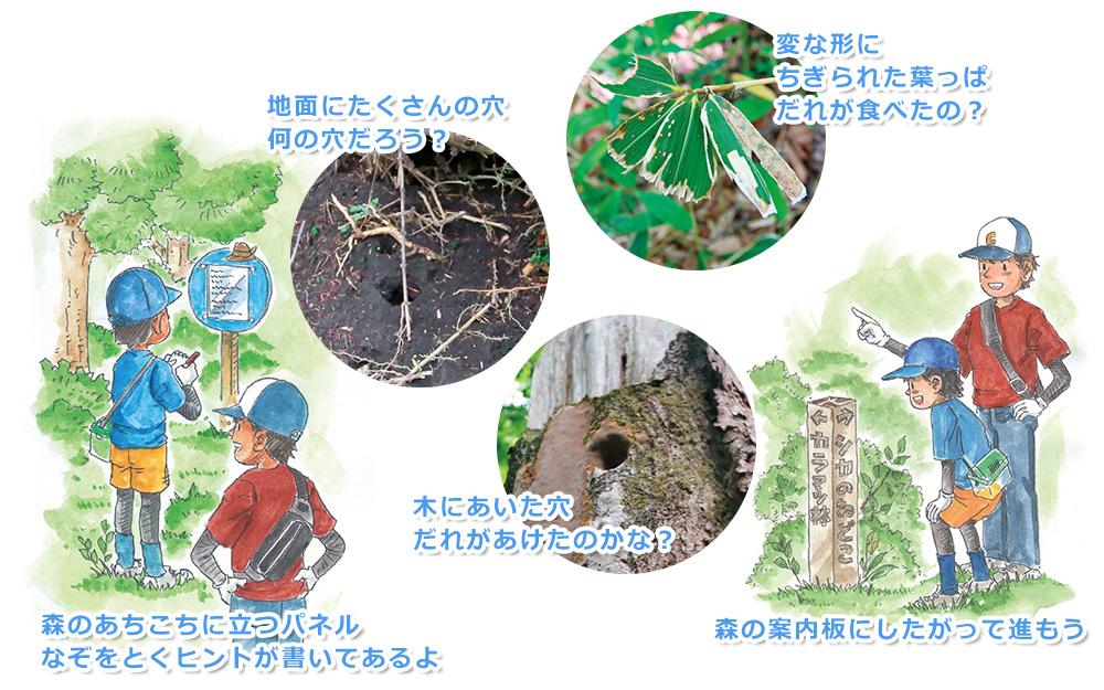 地面にたくさんの穴。何の穴だろう? 変な形にちぎられた葉っぱ。誰が食べたの? 木にあいた穴。誰があけたのかな? 森の案内板にしたがって進もう。森のあちこちに立つパネルには、なぞを解くヒントが書いてあるよ。